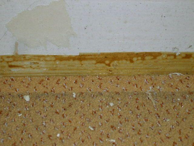 bau de forum estrich und bodenbel ge 14592 teppichkleber schadstoffe und entfernung. Black Bedroom Furniture Sets. Home Design Ideas