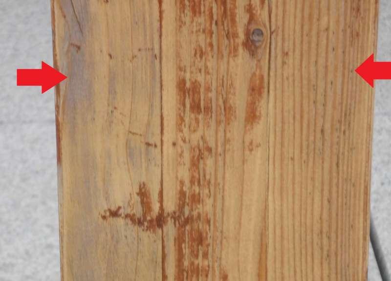bau de forum holzschutz holzsch den holzsanierung 10423 pilz o im holz. Black Bedroom Furniture Sets. Home Design Ideas